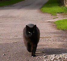 A cat met me on my travels by Jan Carlton