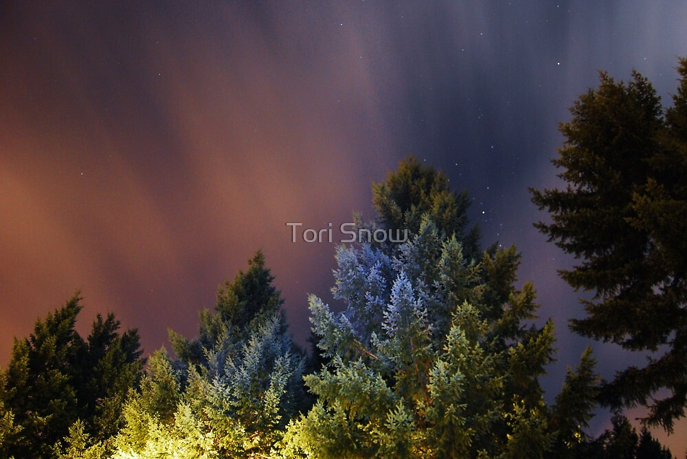 Night Trees by Tori Snow