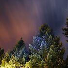 Night Trees by Tori Snow