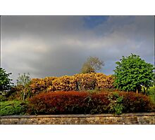 Autumnal Hedgerow Photographic Print