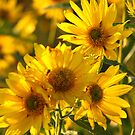 Yellow on the Prairie by lorilee