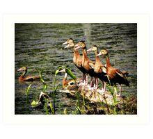Black-bellied Whistling Ducks Art Print