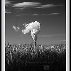 Steam Plume and cane grass, Condong June 2010 by Odille Esmonde-Morgan