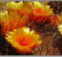 The Beauty of a Barrel Cactus by Terry Temple