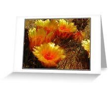 The Beauty of a Barrel Cactus Greeting Card