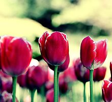 Highrise Tulips by aureecejustin