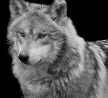 Silver Wolf by Michelle Kempf