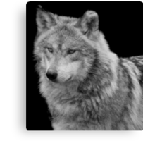 Silver Wolf Canvas Print