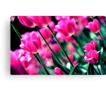 Tulip Rush Canvas Print