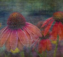 Echinacea Singing the Blues by Dawn Crouse
