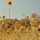 Praying Mantis Sunflower by Stephanie Newton