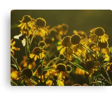 Sneezeweed and the Bee Canvas Print