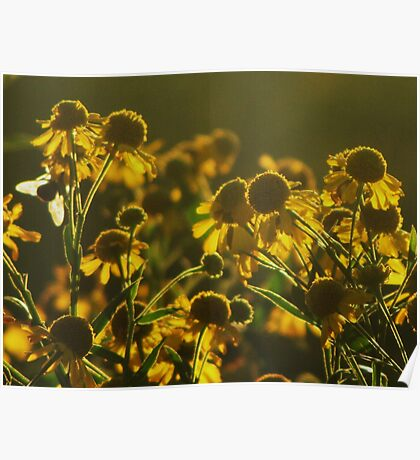 Sneezeweed and the Bee Poster