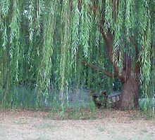 Weeping Willow by TxGimGim