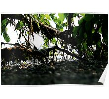 its a jungle out there Poster