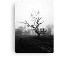 High Country Mist Canvas Print