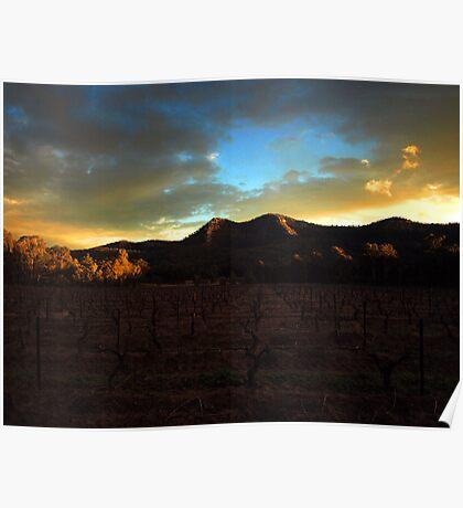 Vineyard Sunset Poster