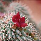 SUCCULENTS OF NAMAKWALAND - WESTERN CAPE SOUTH AFRICA by Magriet Meintjes