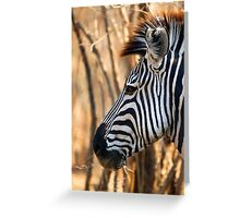 Zebra Portrait Greeting Card