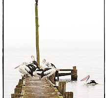 """ Pelican's in the Fog "" by Malcolm Heberle"