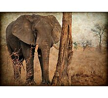 ALL IN AUTUM - WHEN IS SPRING? - THE AFRICAN ELEPHANT -Loxodonta Africana Photographic Print