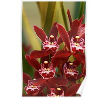 Orchids 004 Poster