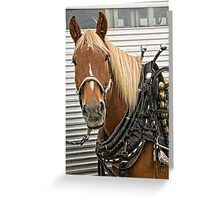 All Dressed Up And No Place To Go Greeting Card