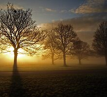 MIst in the Park by Steve  Wallace