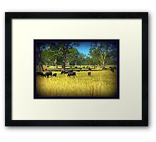 Cows in the country Framed Print