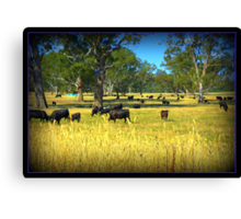 Cows in the country Canvas Print