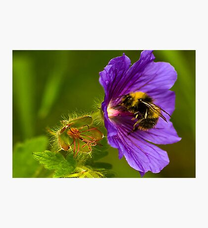 The Pollen Collector Photographic Print