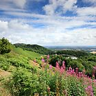 Malvern Hills : Glorious Summer by Angie Latham