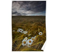 Daisies and Barley Poster