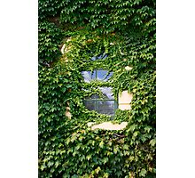 Ivy covered window Photographic Print