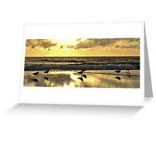 Seagull Sunset Strut Greeting Card