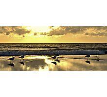 Seagull Sunset Strut Photographic Print