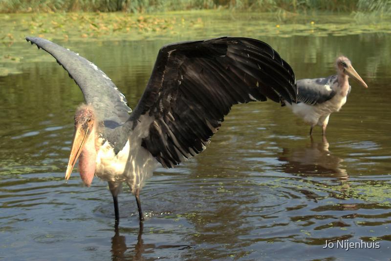 Marabou Wings by Jo Nijenhuis