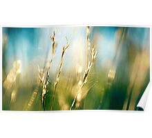 Light Grass Poster