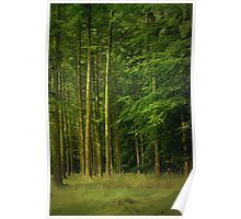 Enchanting Clearing ~ Forest Of Bowland ~ Poster