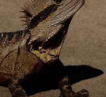 Eastern Water Dragon by Sarah Howarth [ Photography ]