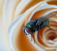 Fly on flower by Salabaster