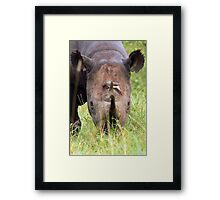 Black Rhino Framed Print