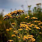 Golden Moments - Tansy Flowers on Georges Island - Boston Harbor by Mark Tisdale