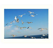 """Seagulls "" Art Print"