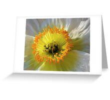 Wild Desert Poppy Greeting Card