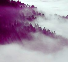 Forest Fog #redbubble by 83oranges