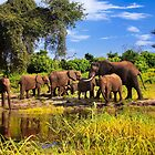 Elephants on the Chobe River, Botswana, Africa. by photosecosse /barbara jones