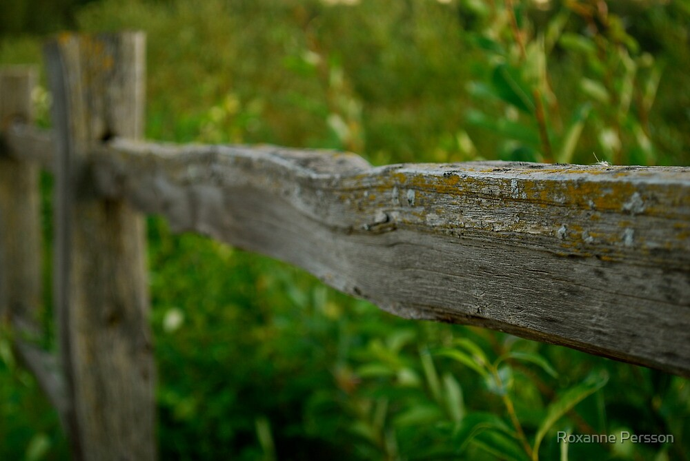 The Fence by Roxanne Persson