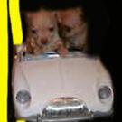riding wild by peanut1416