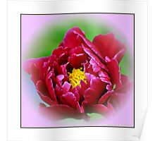 """""""Red Peony"""" Poster"""